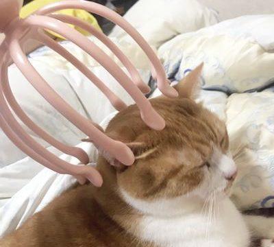 ヘッドスパされる猫