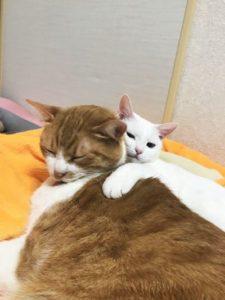 穏やかな時の猫たち